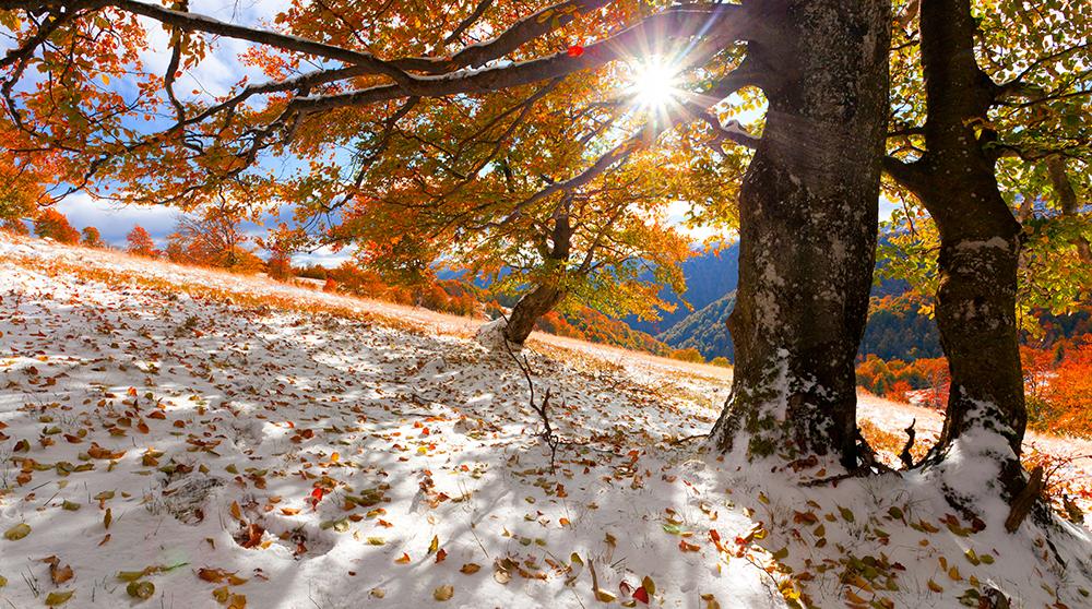 jesień/zima